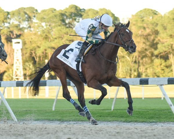 Sole Volante - S V Photography - Tampa Bay Downs