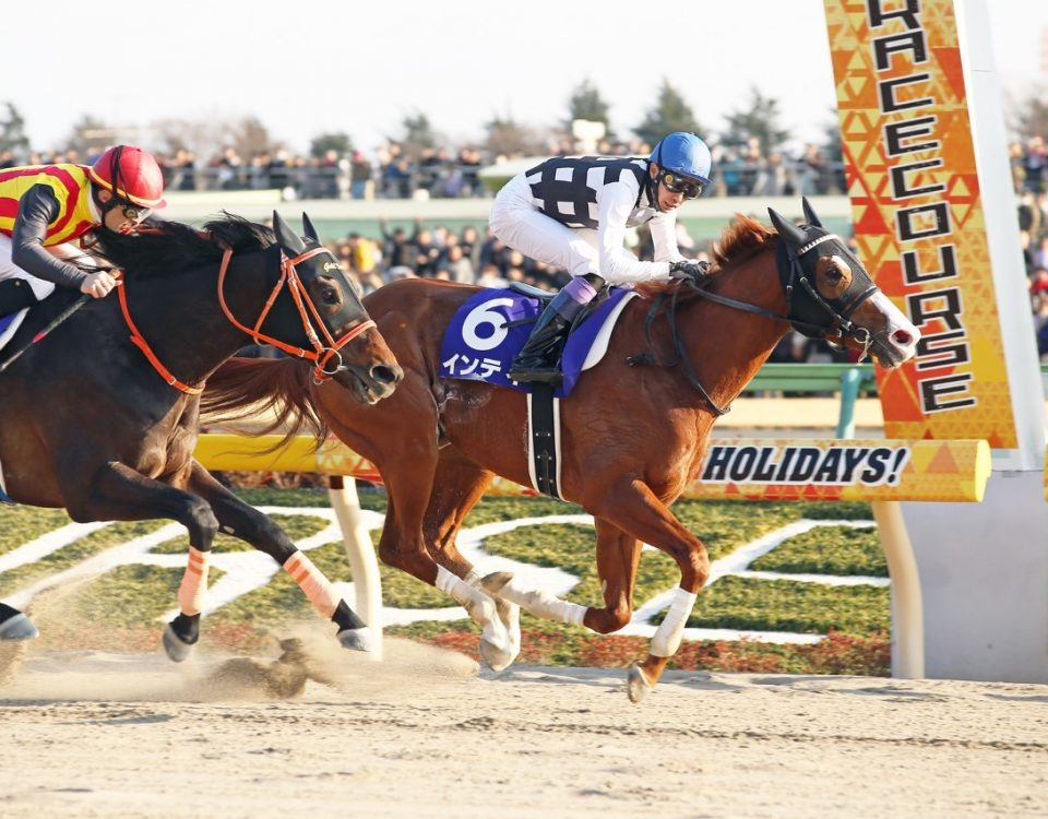 Inti -February Stakes '19 / Japan Racing Association.