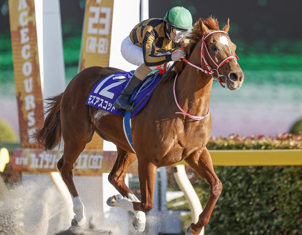 Mozu Ascot - 2020 February Stakes - Tokyo Racecourse Foto