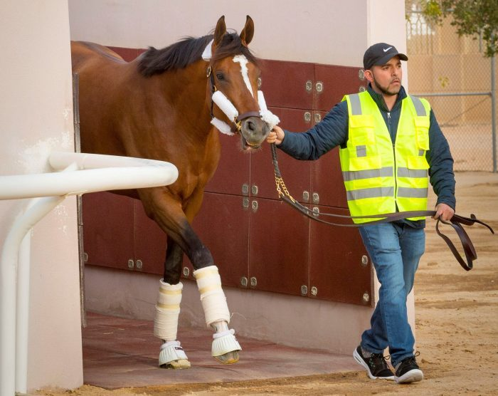 American star Maximum Security arriving in Riyadh Credit - Mohammed Alshinaifi