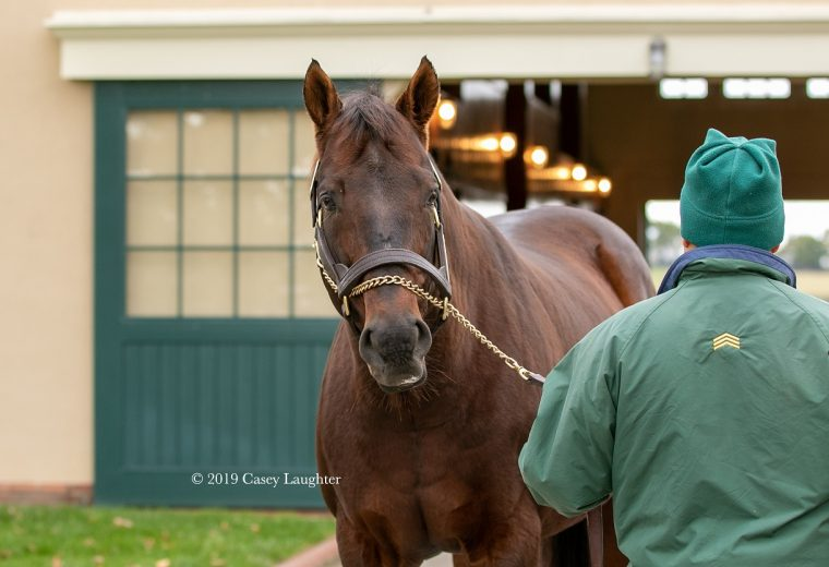 Candy Ride is the sire of horses like Gun Runner and Game Winner, among others. He stands at Lanes End in Kentucky.