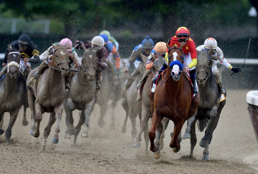 Justify the Belmont Stakes credit Hugh Deucey - Coglianese Photo.