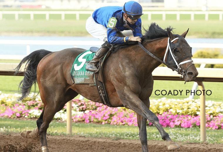 Shared Sense - Coady Photo