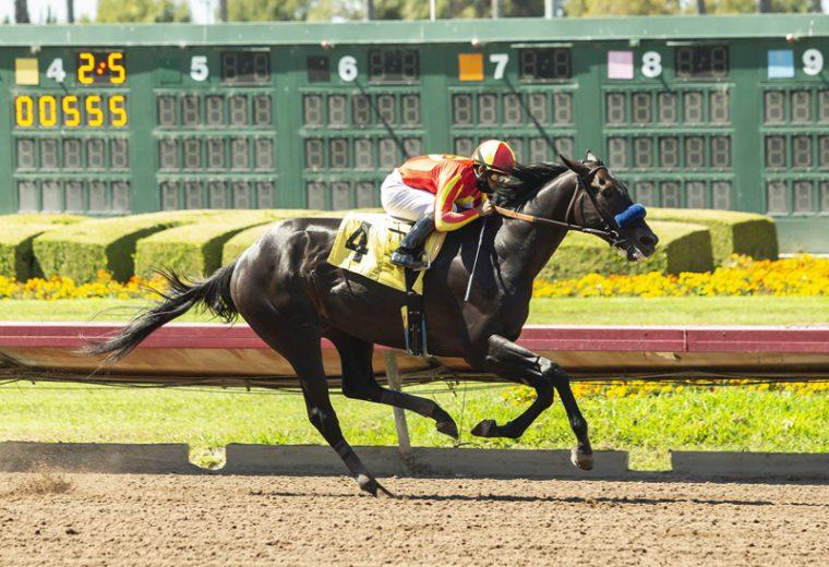 Uncle Chuck and jockey Luis Saez win the Grade III, $150,000 Los Alamitos Derby, Saturday, July 4, 2020 at Santa Anita Park, Arcadia CA. © BENOIT PHOTO