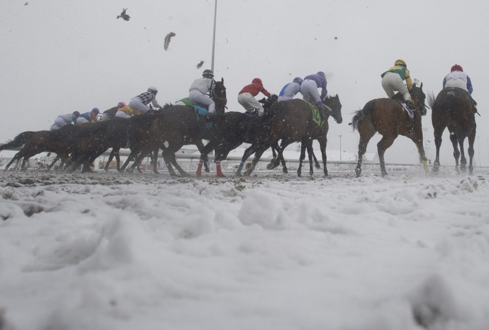 Woodbine - Michael Burns Photo