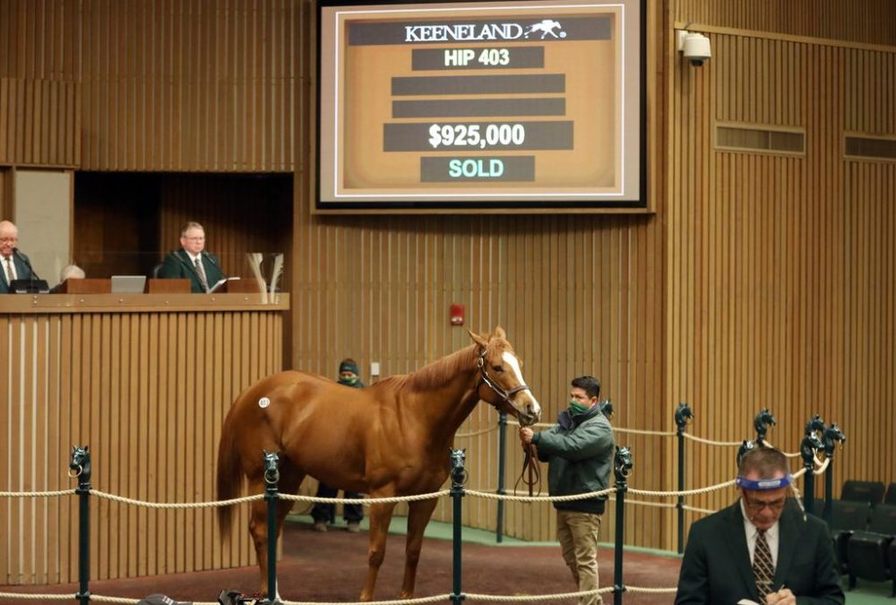 Hip 403, Regal Glory, $925,000