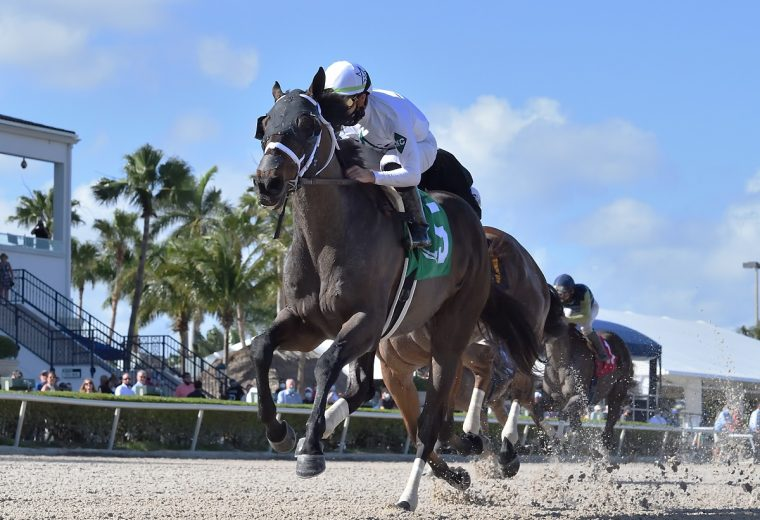 Fearless the GP Mile - Coglianese Photo