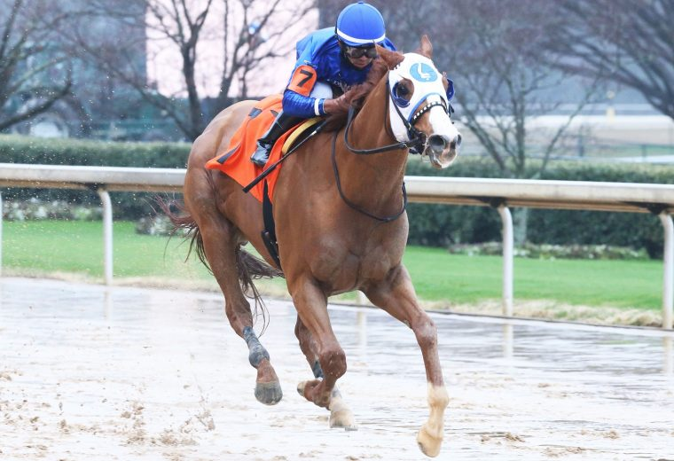 MYSTIC GUIDE - The Razorback Handicap G3 - 62nd Running - Coady Photo
